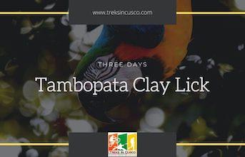 Tambopata Clay Lick