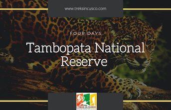 Tambopata National Reserve Peru – Best Tambopata Tours