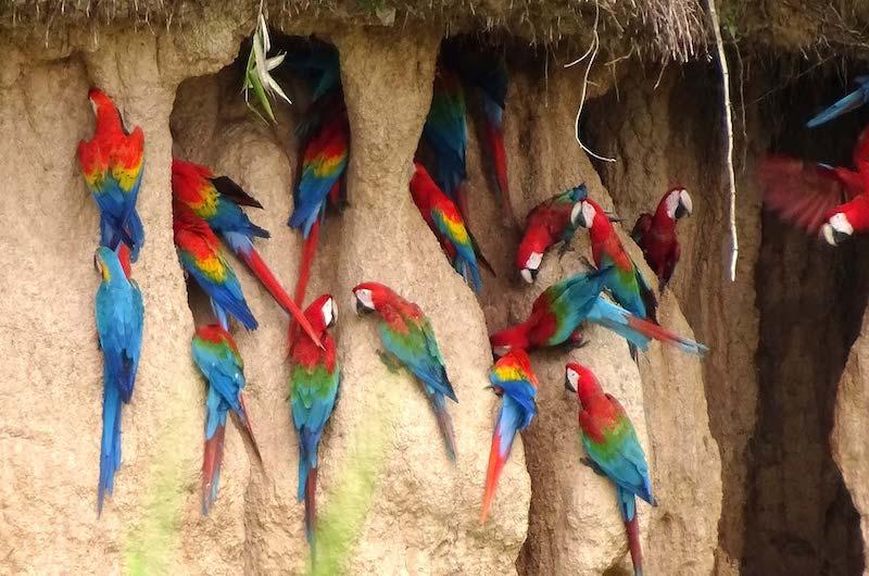 Lake Sandoval Peru, Tambopata Clay Lick, Tambopata National Reserve Peru
