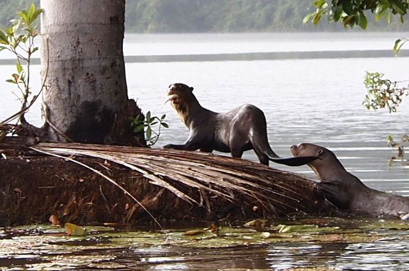 Lake Sandoval Peru, Tambopata National Reserve Peru